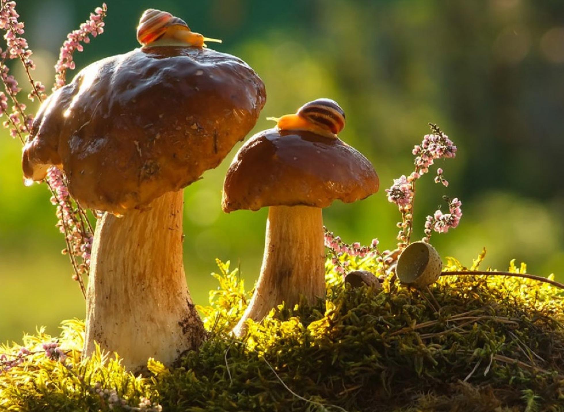 Hình ảnh cây nấm cực đẹp
