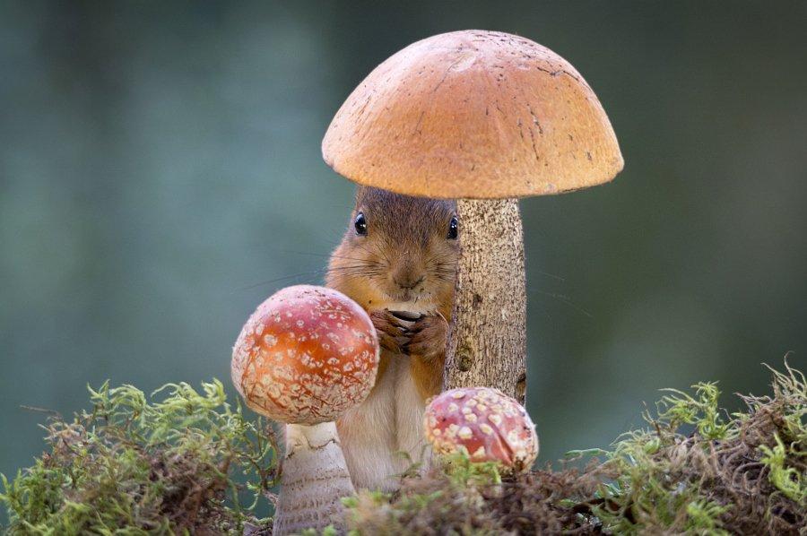Hình ảnh cây nấm cùng sóc chuột