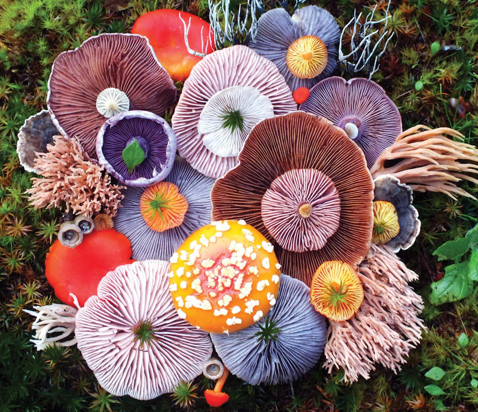Hình ảnh cây nấm đẹp nhất thế giới