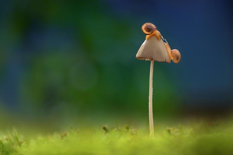 Hình ảnh cây nấm và vợ chồng nhà ốc sên