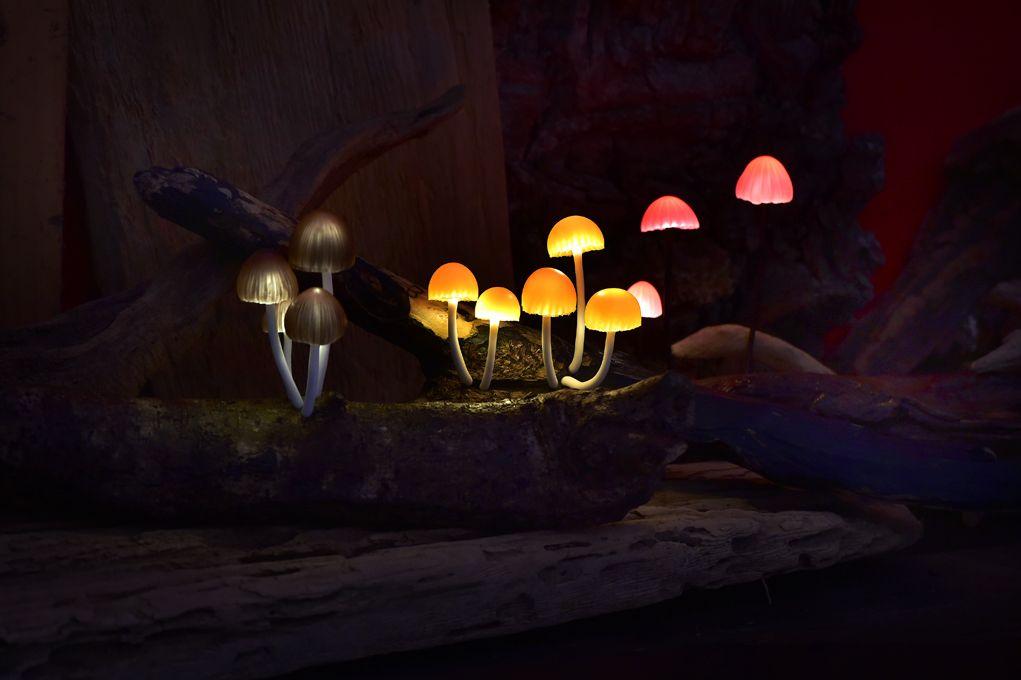Hình ảnh độc đáo về những cây nấm phát sáng
