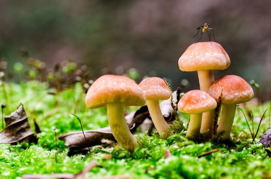 Hình ảnh gia đình nhà nấm
