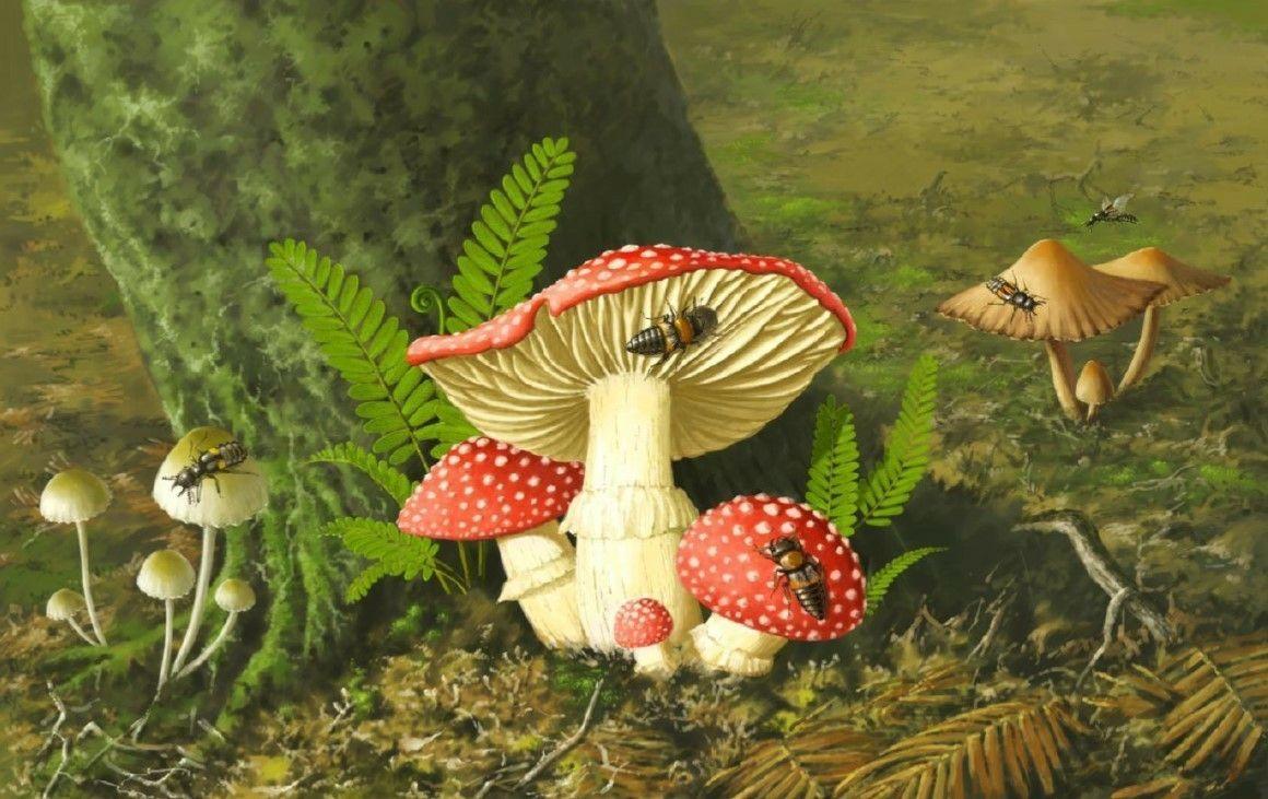 Hình ảnh những cây nấm dại trong rừng