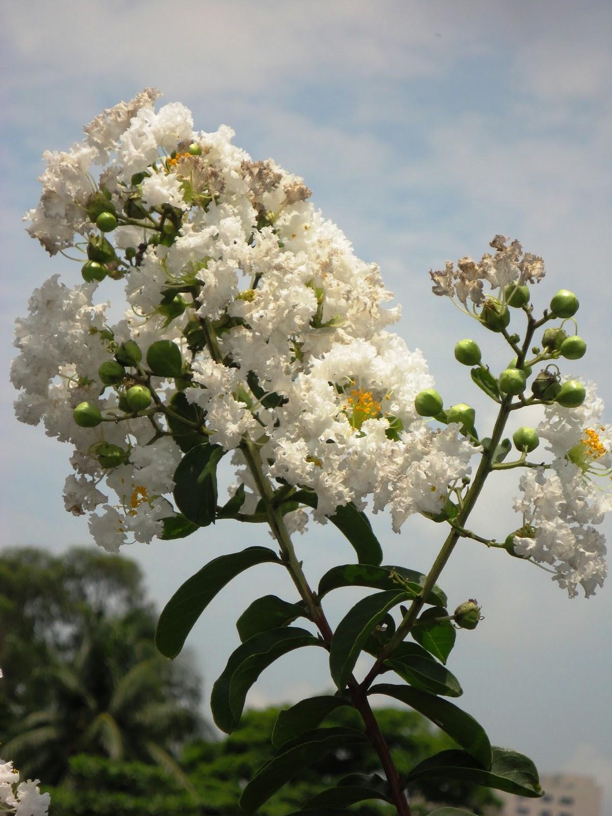 Hình chùm hoa Tường vi nở đẹp mê đắm