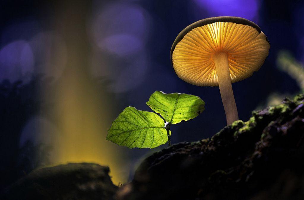 Hình những cây nấm phát sáng