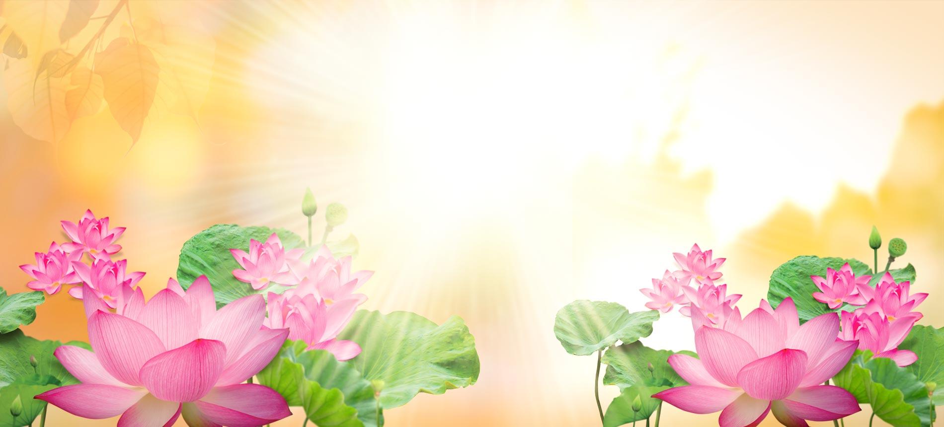 Background phật giáo hoa sen