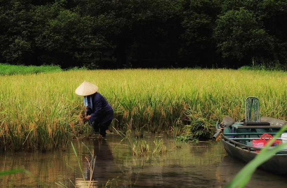 Hình ảnh người lao động Việt Nam