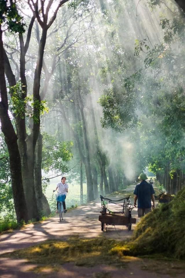 Hình ảnh thiên nhiên làng quê Việt Nam