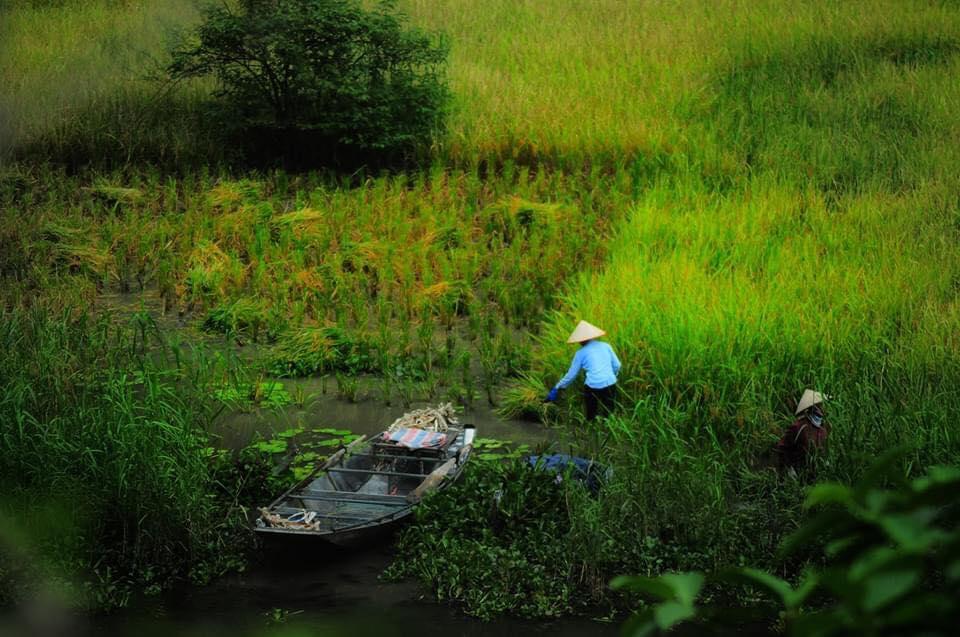 Hình ảnh thiên nhiên và đồng ruộng