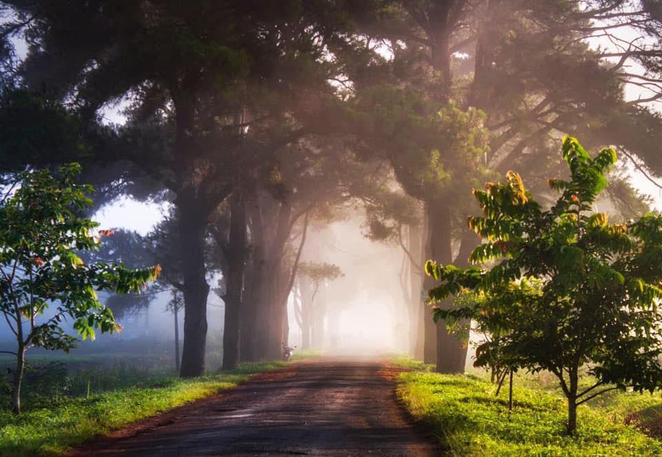 Hình ảnh thiên nhiên Việt Nam nắng sớm