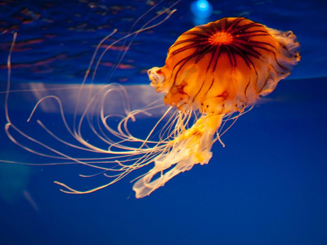 Hình ảnh chụp con sứa âm bản