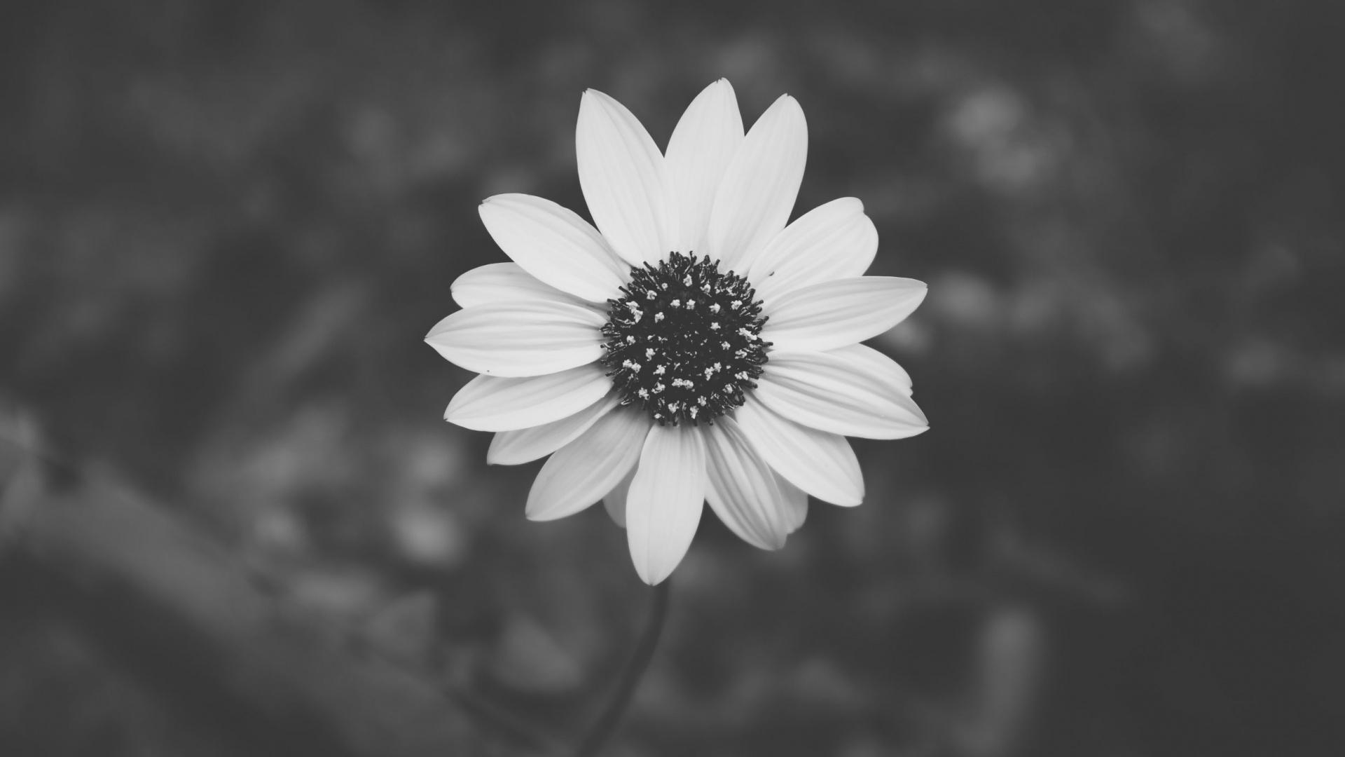 Ảnh nền đen trắng