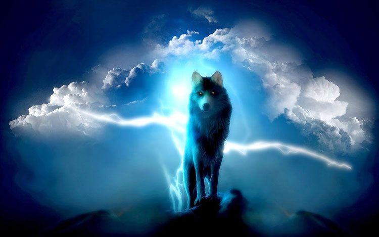Ảnh sói đẹp