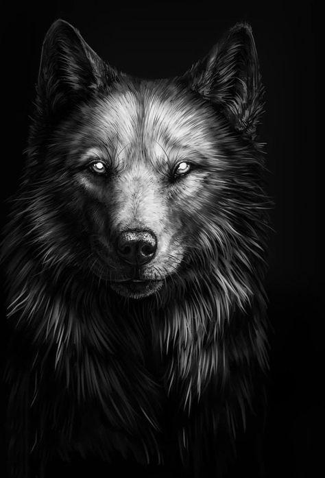 Ảnh sói hình nền