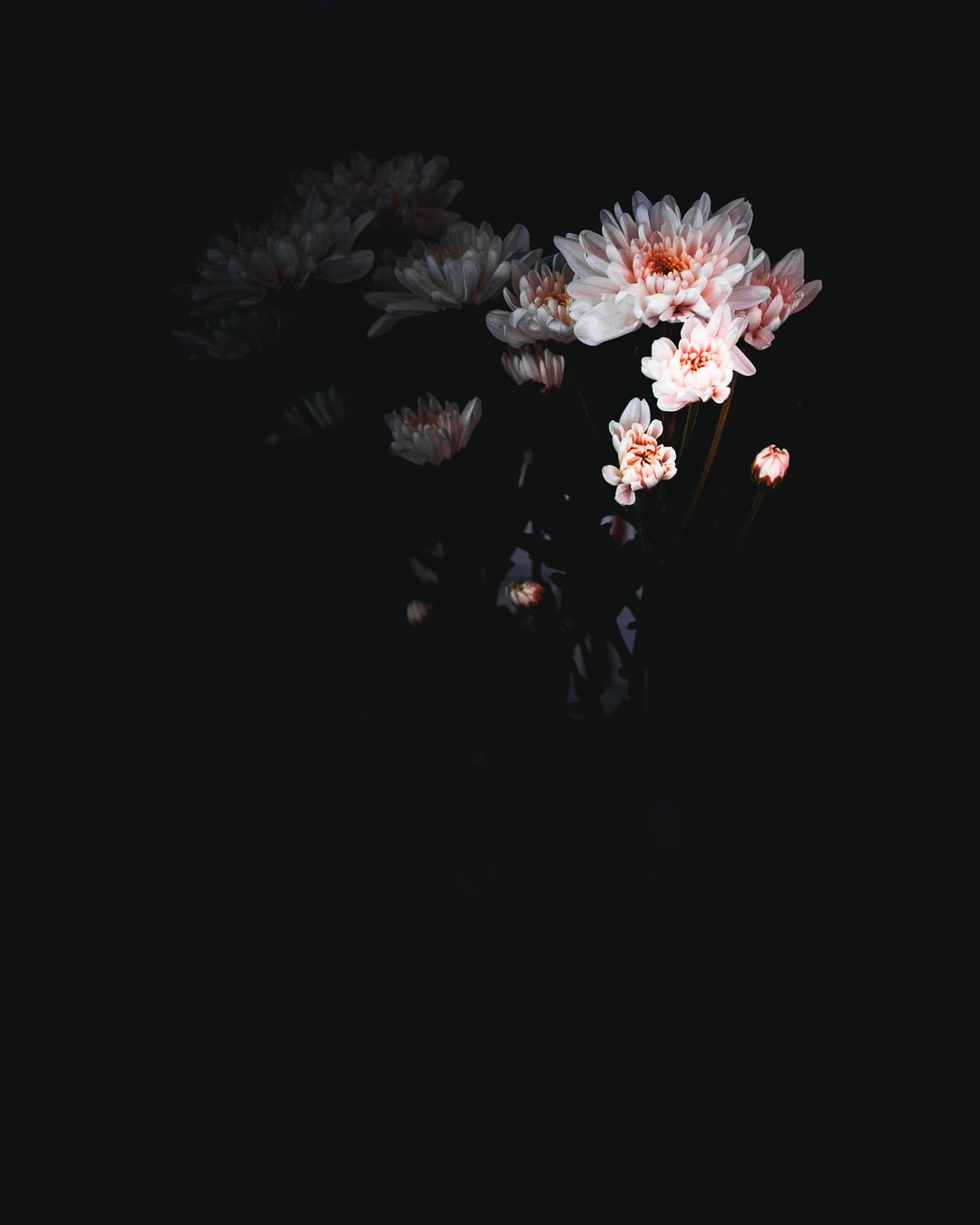 Background hoa nền đen đẹp nhất