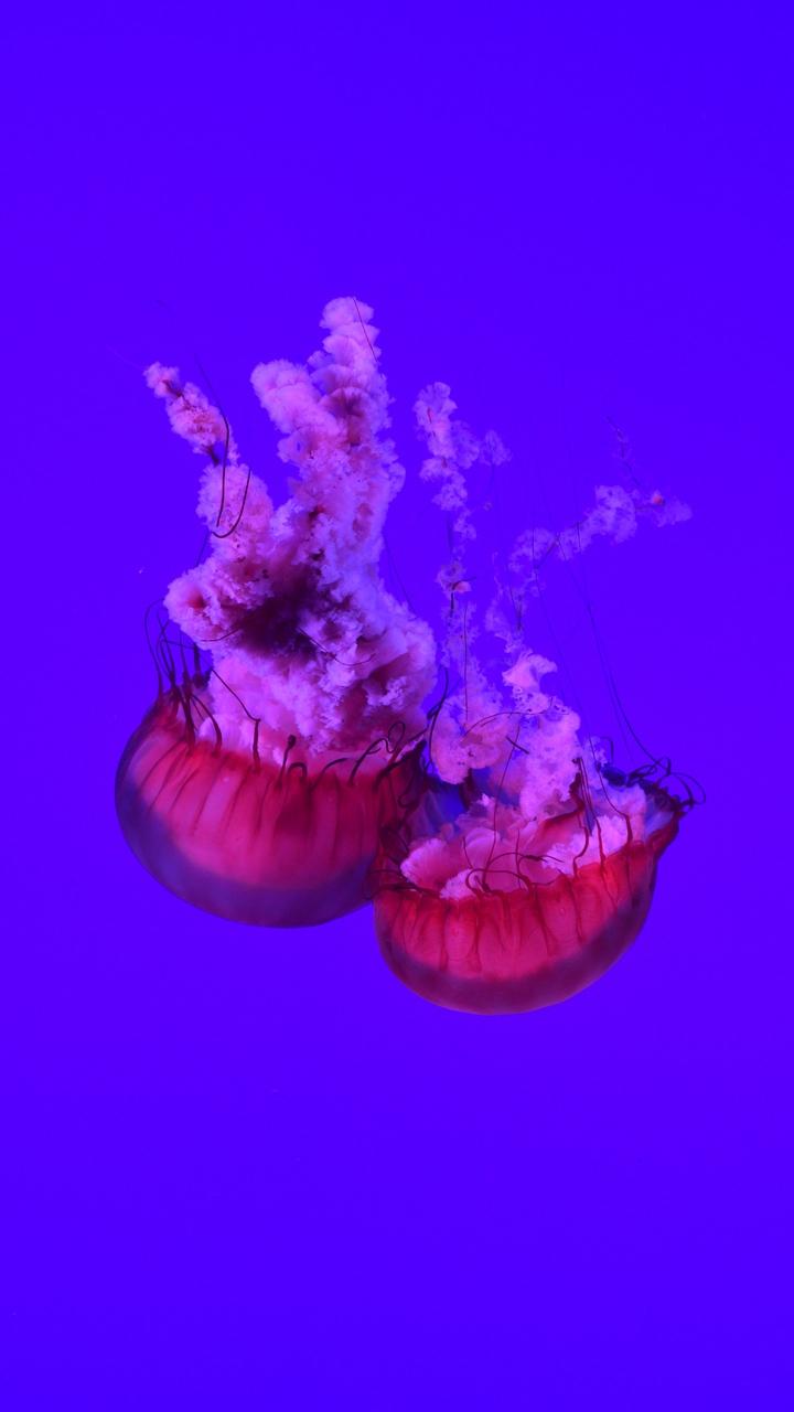 Hình ảnh con sứa dưới biển