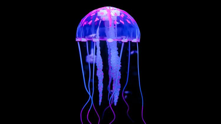 Hình ảnh con sứa nhỏ