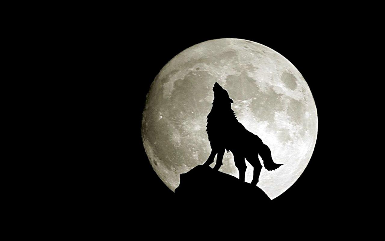 Hình ảnh sói dưới ánh trăng