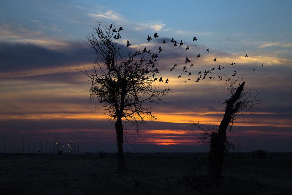 Hình ảnh về chiều tối