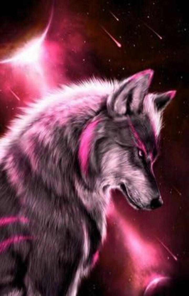 Hình ảnh về sói