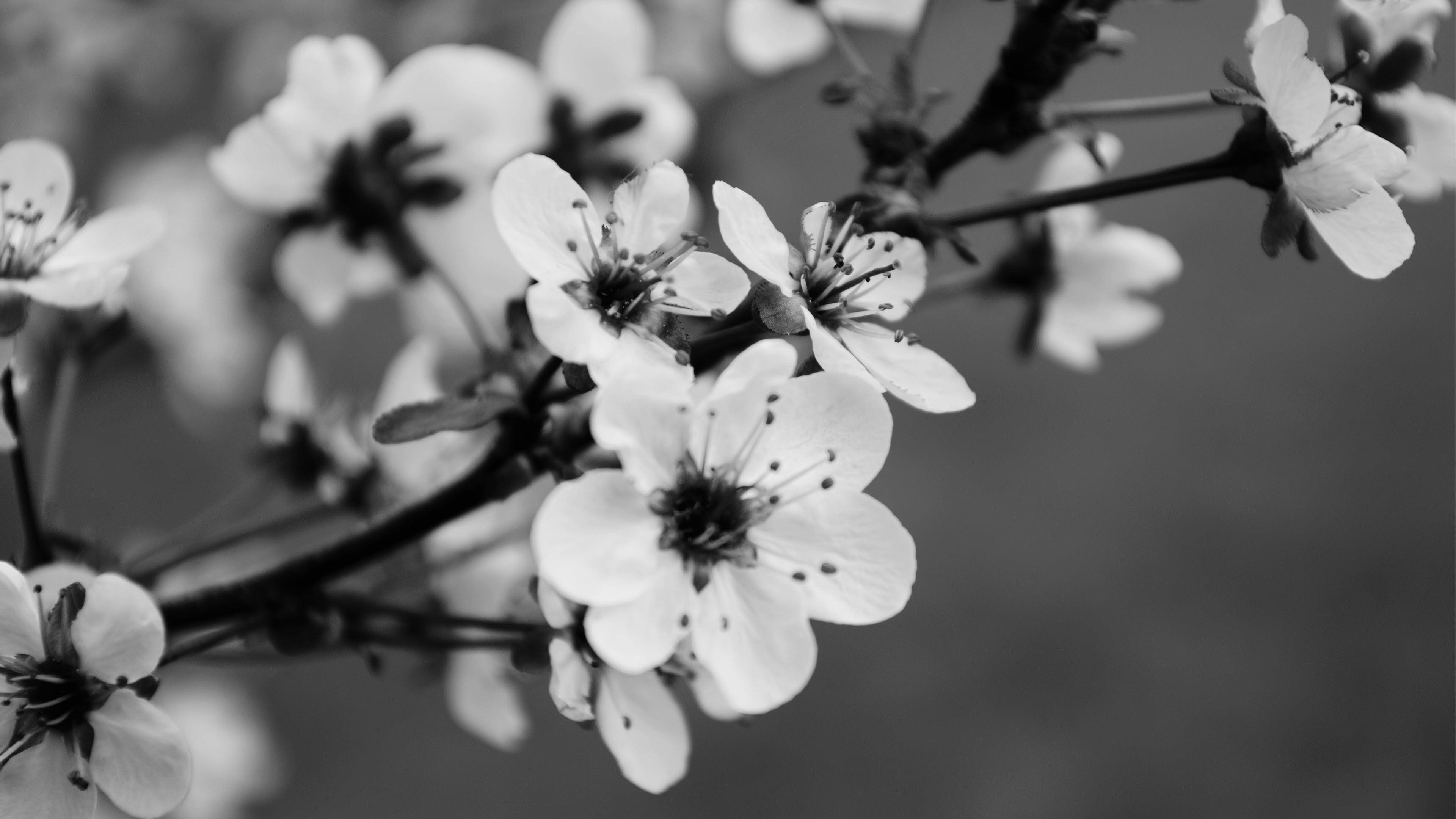 Ảnh nền hoa trắng đen