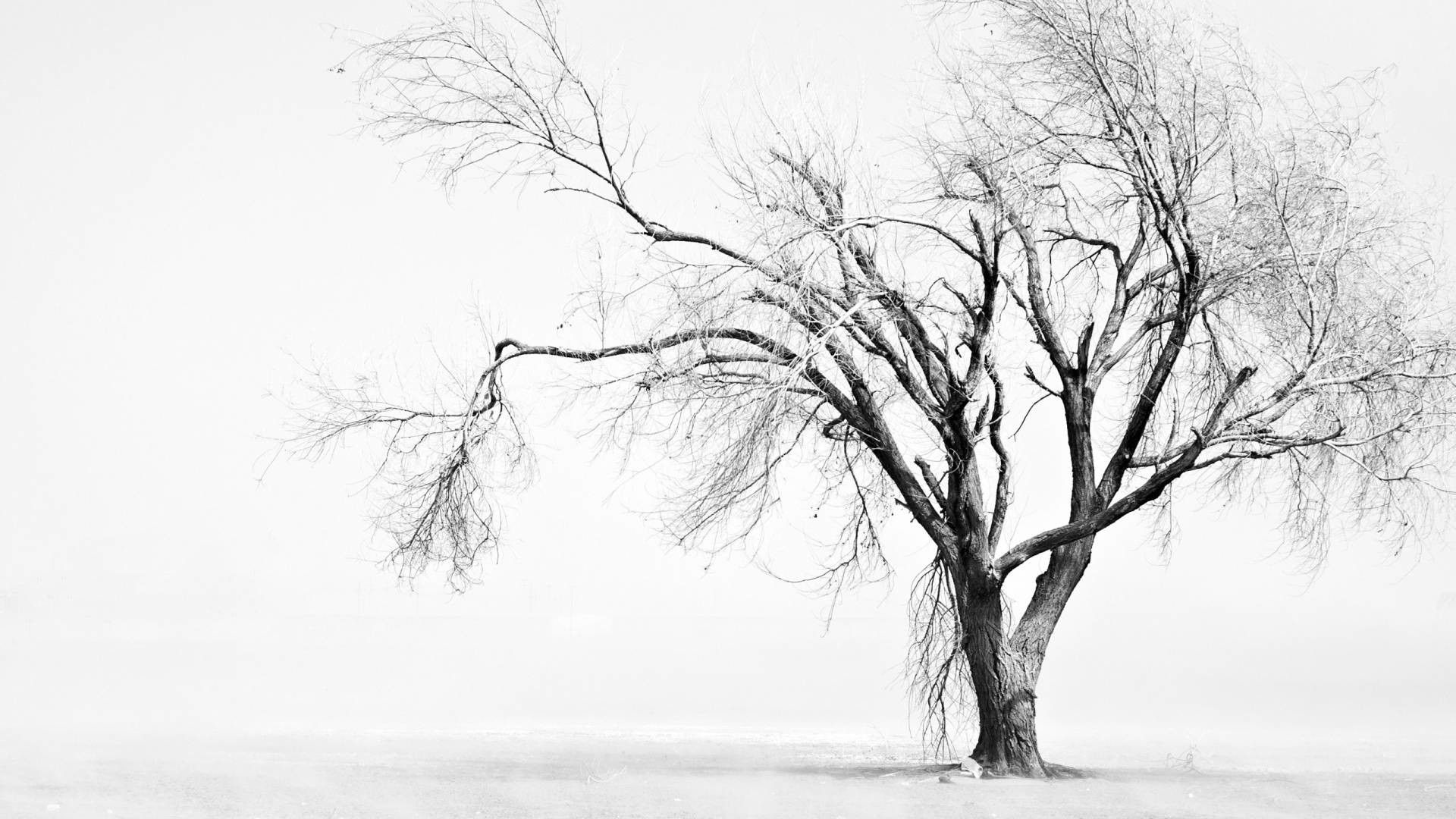 Hình nền cây trắng đen
