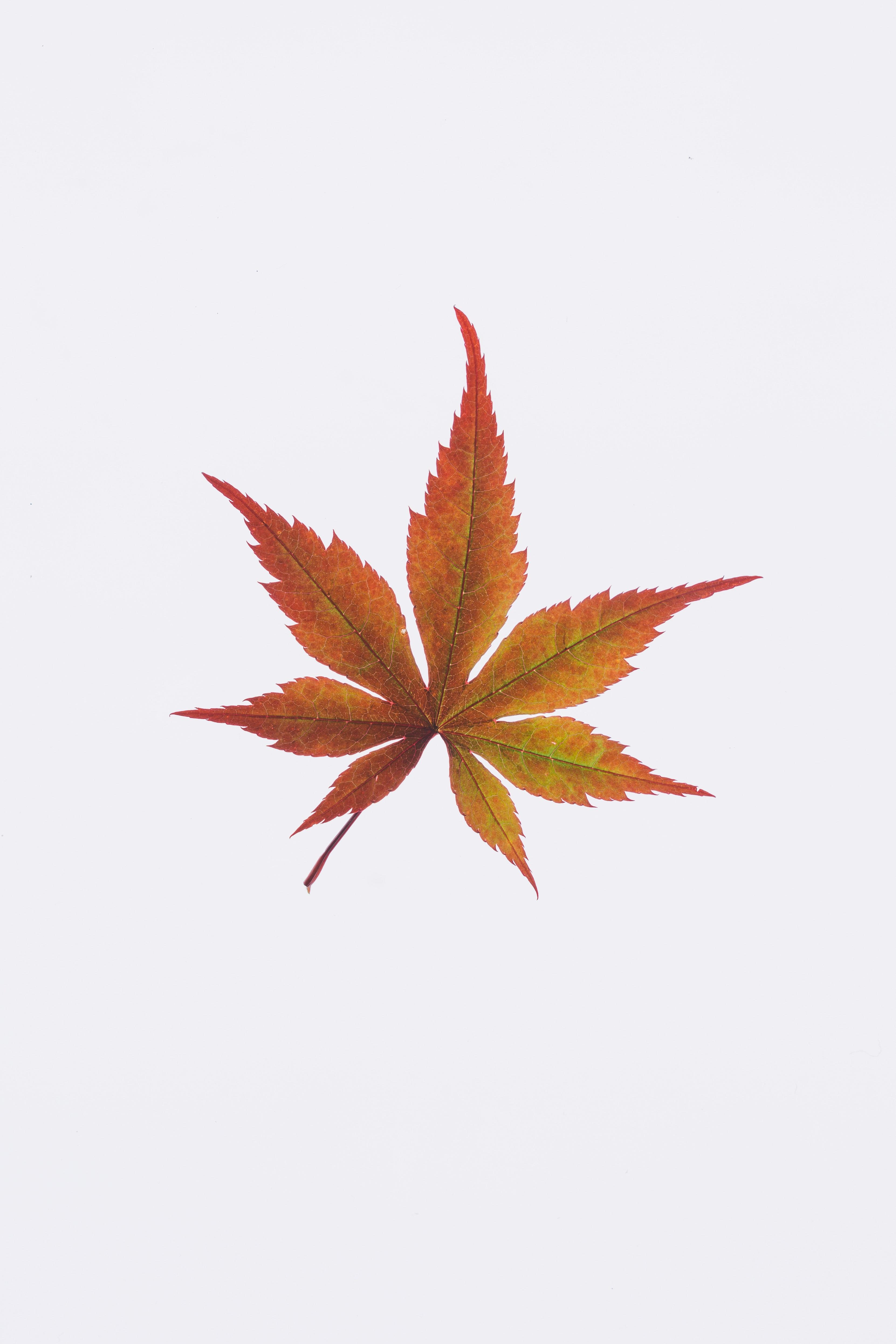 Ảnh rừng phong đỏ Canada