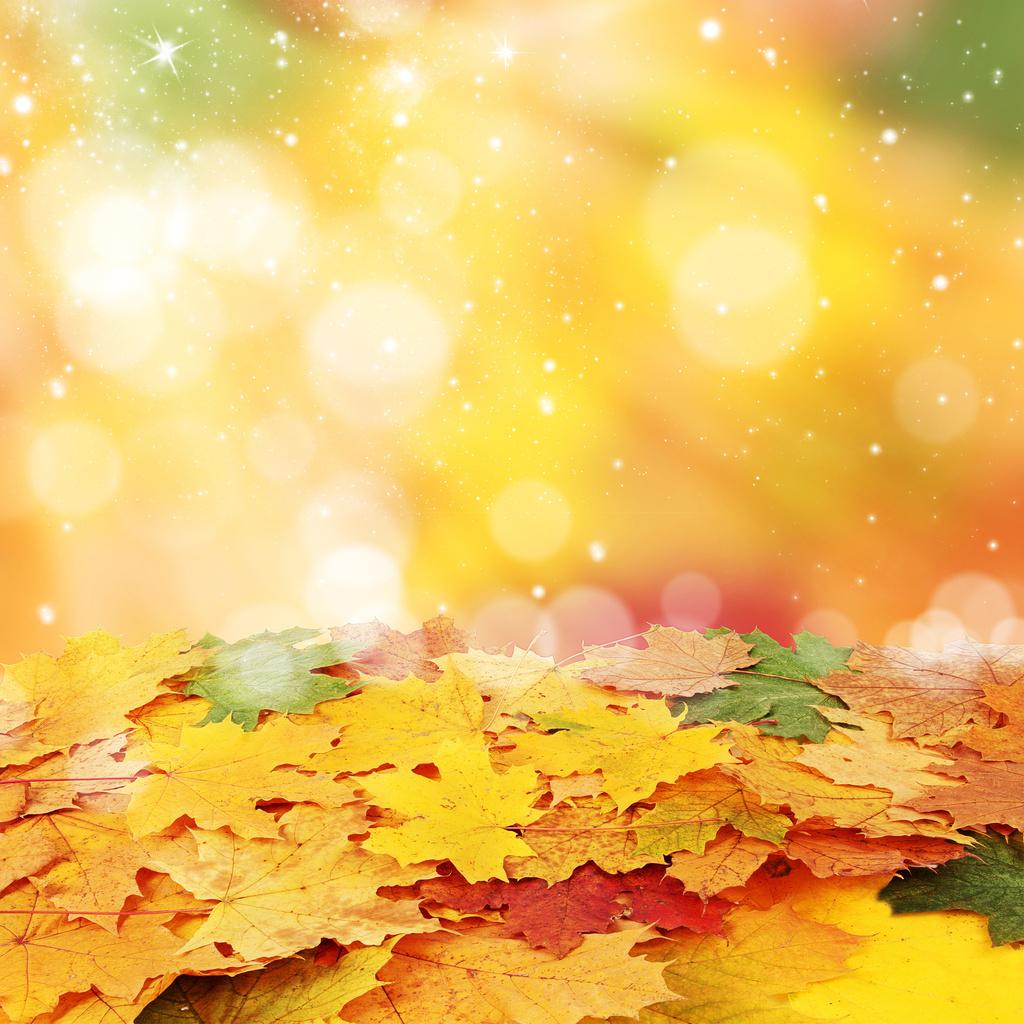 Ảnh slide mùa thu