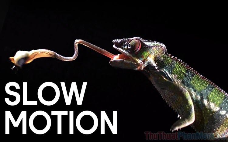 Slow Motion là gì?