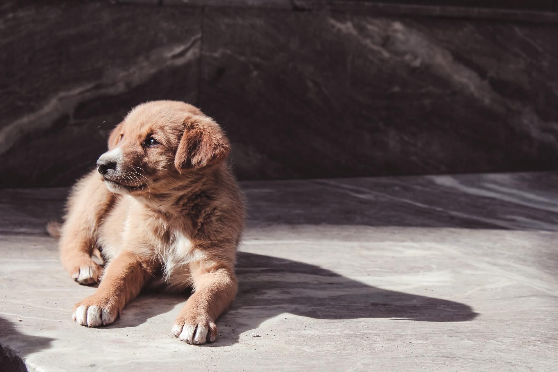 Ảnh nền điện thoại chó con dễ thương nhất