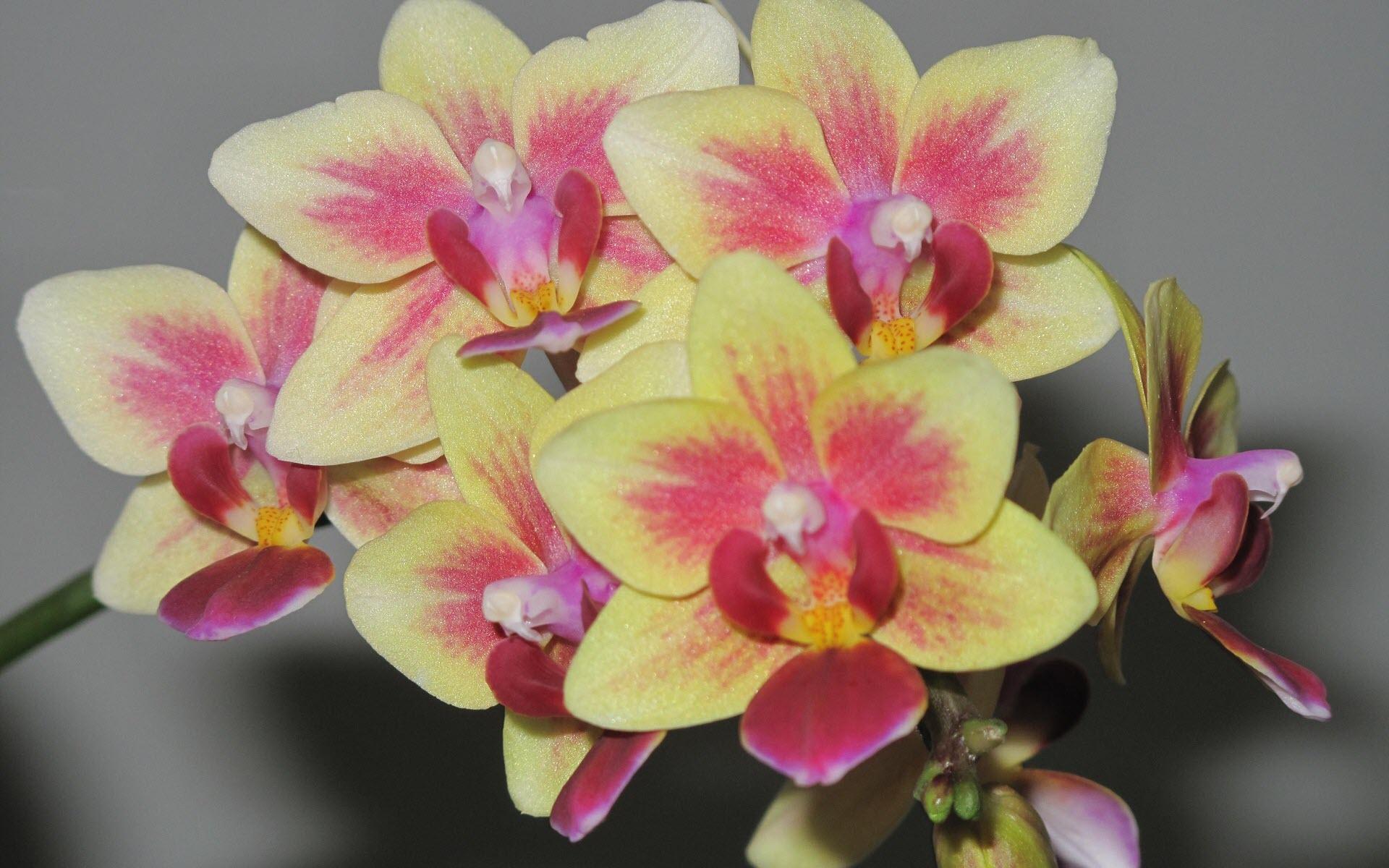 Ảnh nền hoa lan đẹp nhất