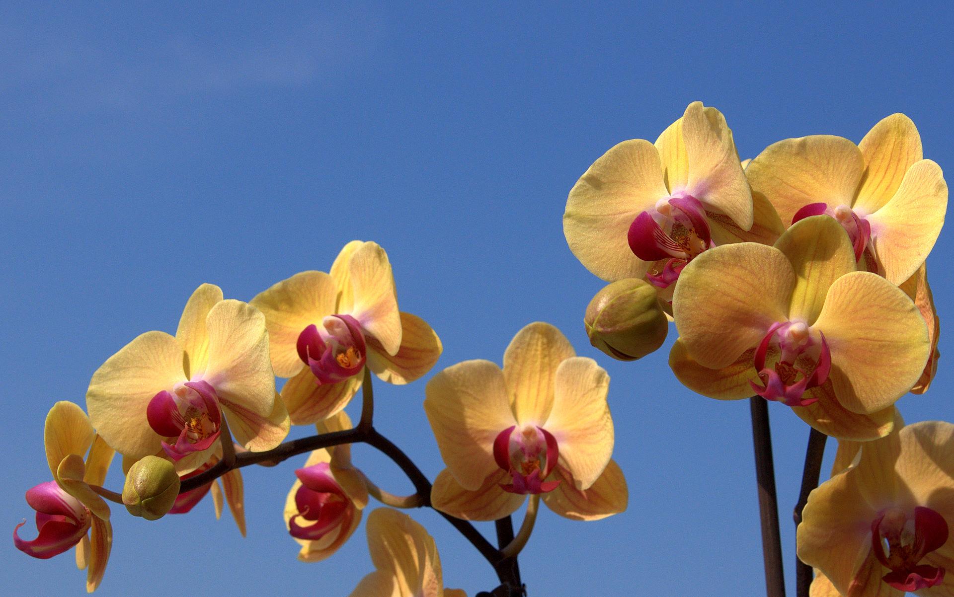 Ảnh nền hoa lan độc đáo, ấn tượng