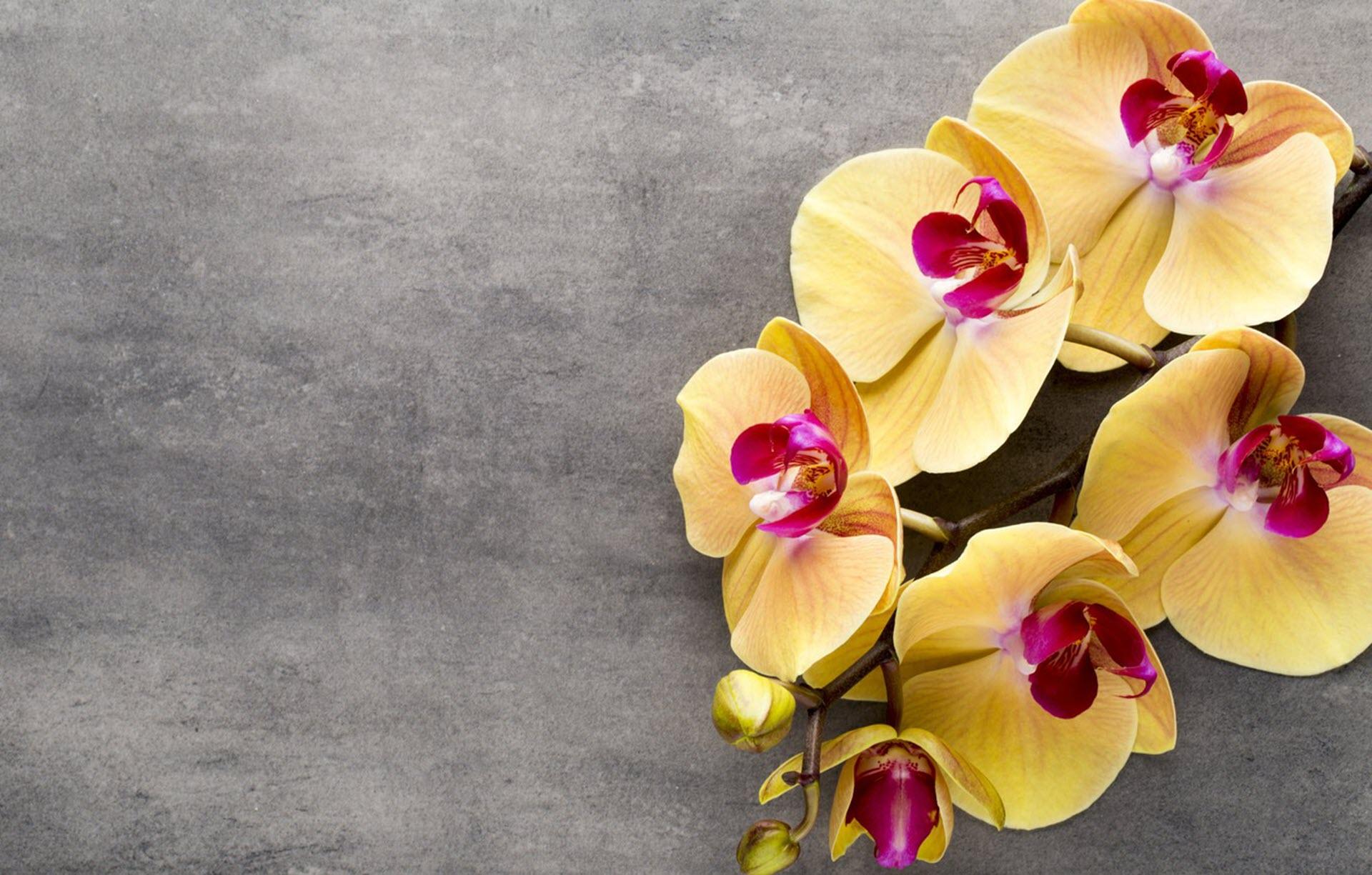 Ảnh nền hoa lan vàng đẹp