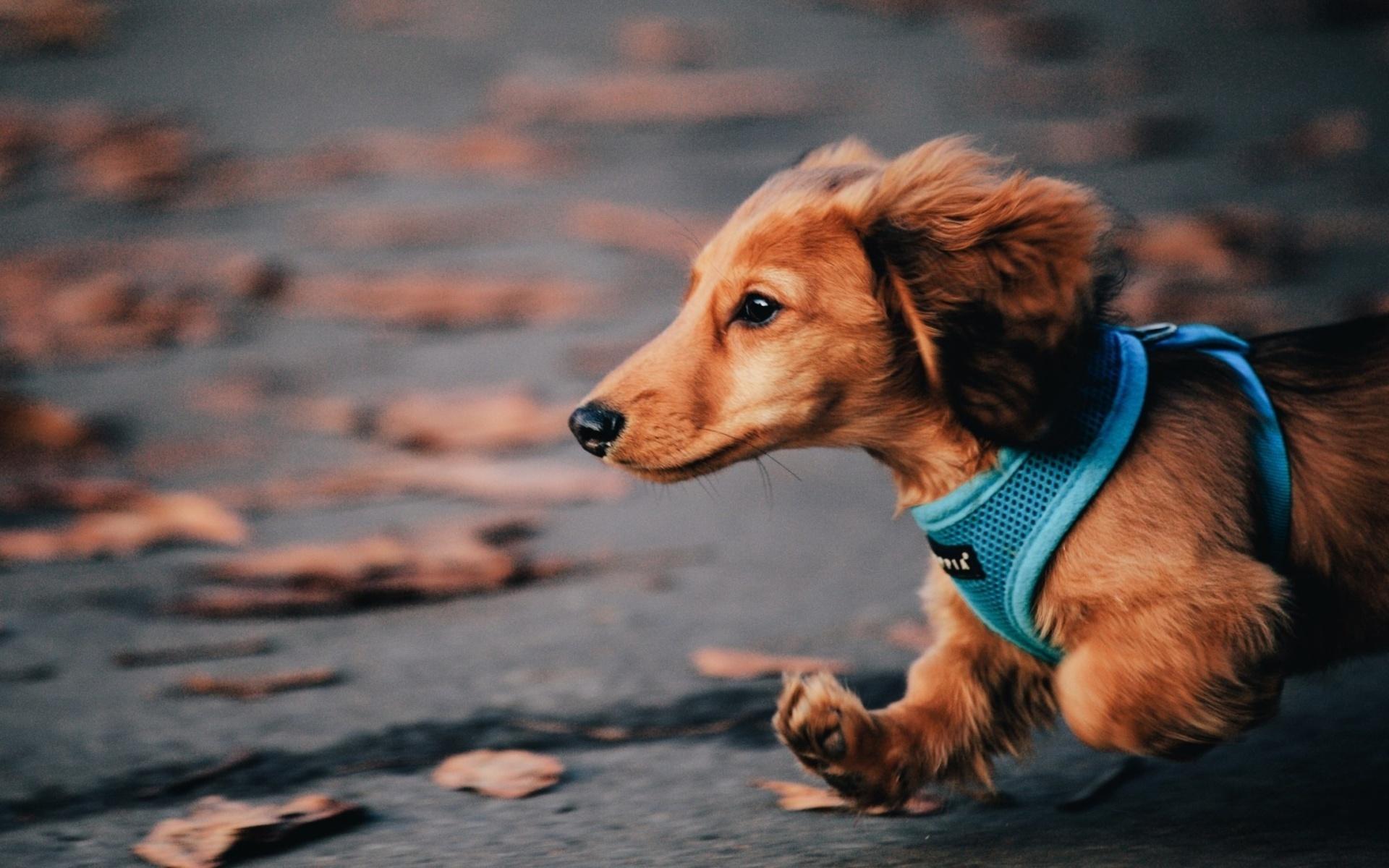 HÌnh nền chú chó con cute dễ thương