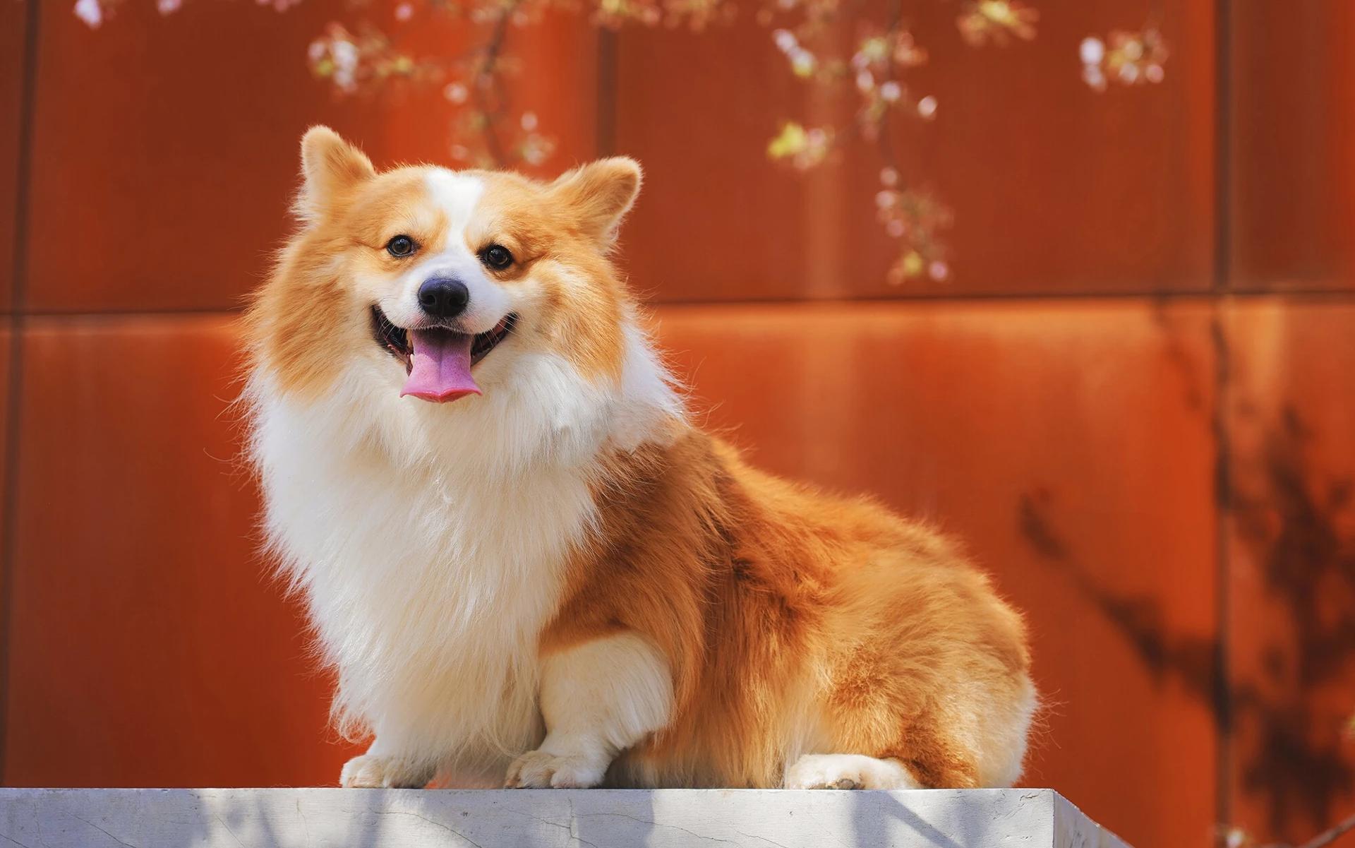 Hình nền chú chó con đáng yêu dễ thương