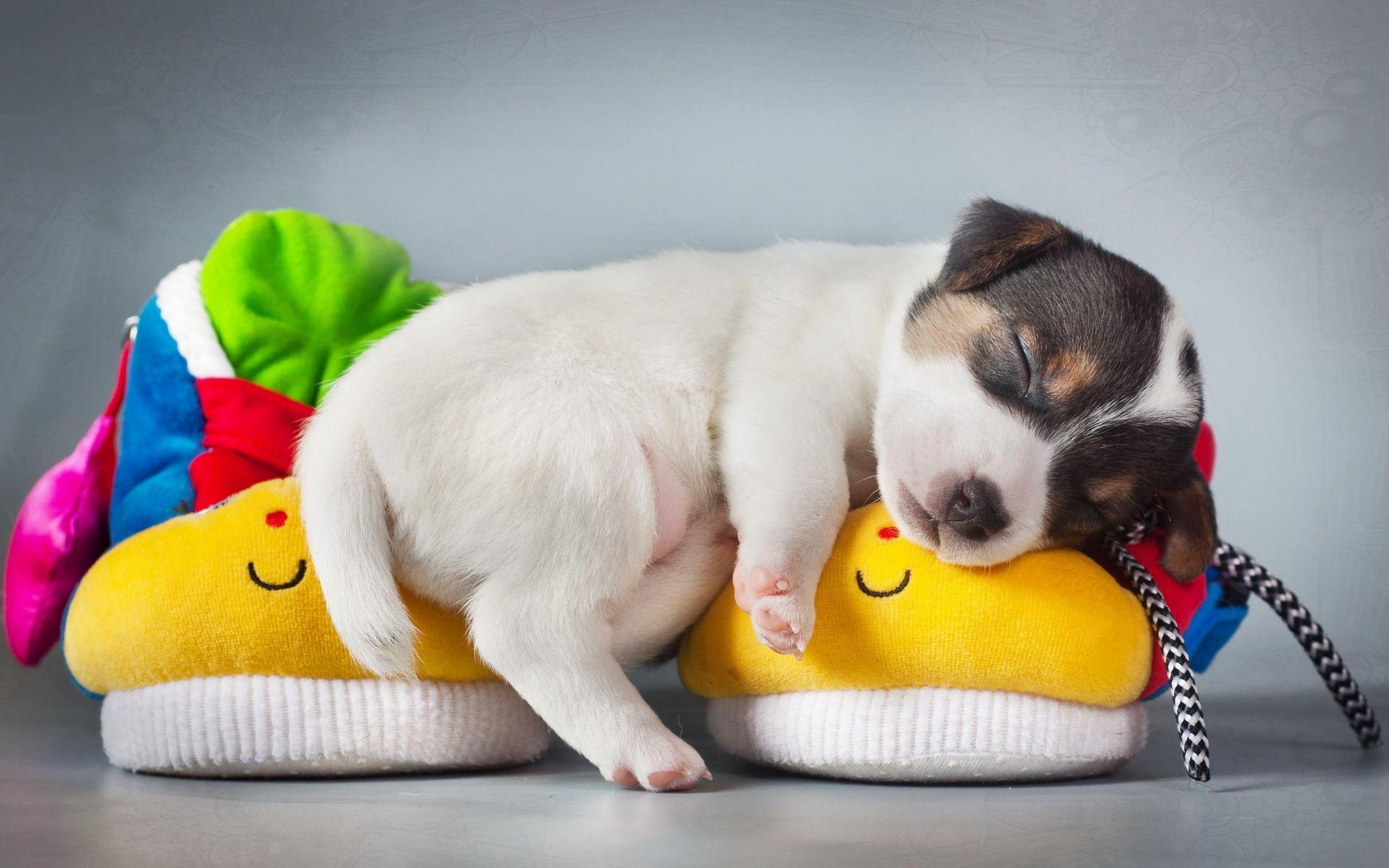 Hình nền chú cún đáng yêu