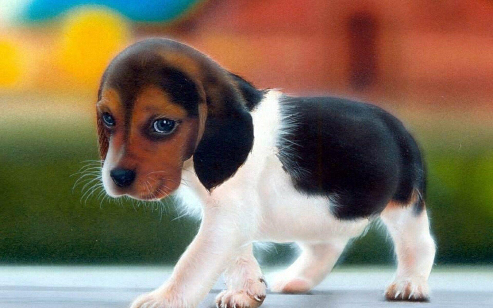 Hình nền cún con đeo tai nghe