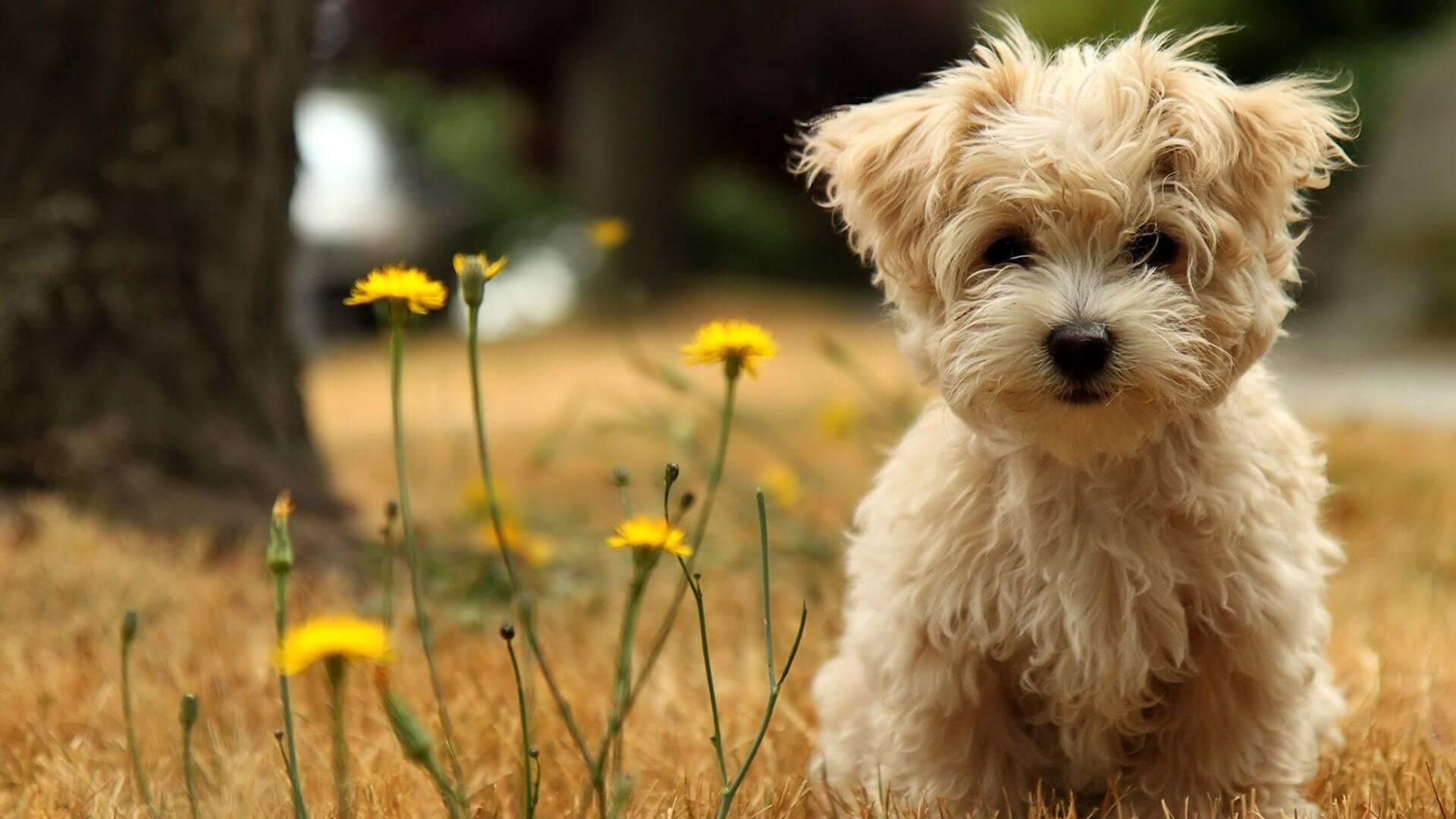 Hình nền cún con vui vẻ hạnh phúc