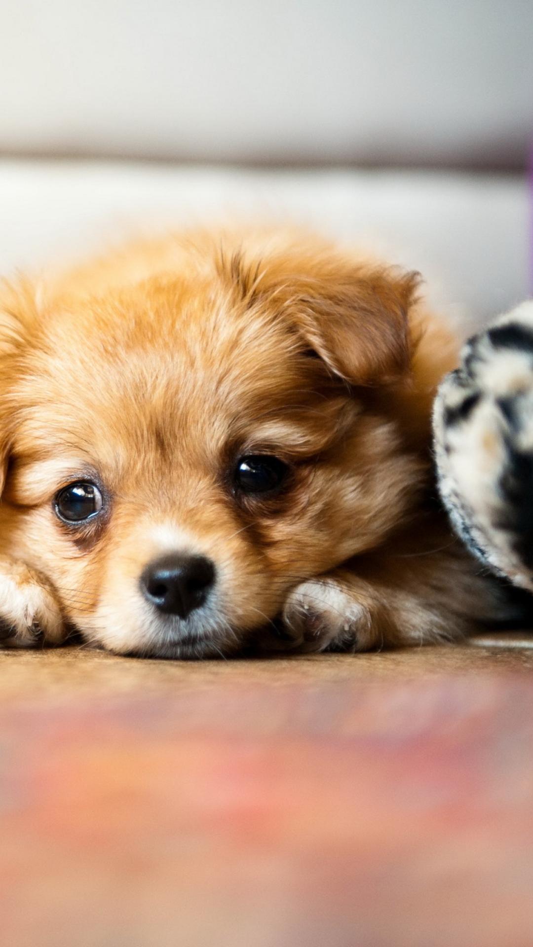 Hình nền điện thoại chó con dễ thương