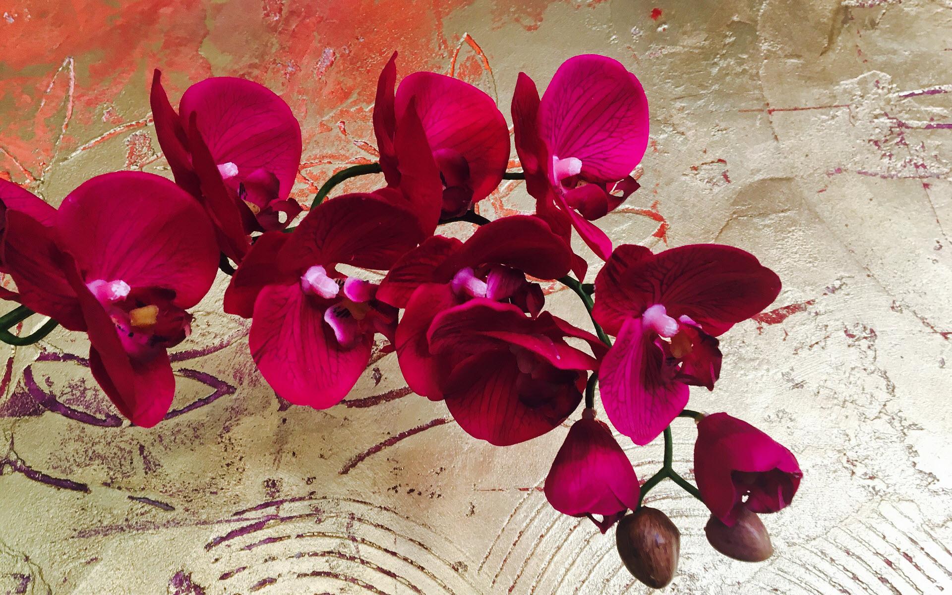 Hình nền đẹp về hoa lan