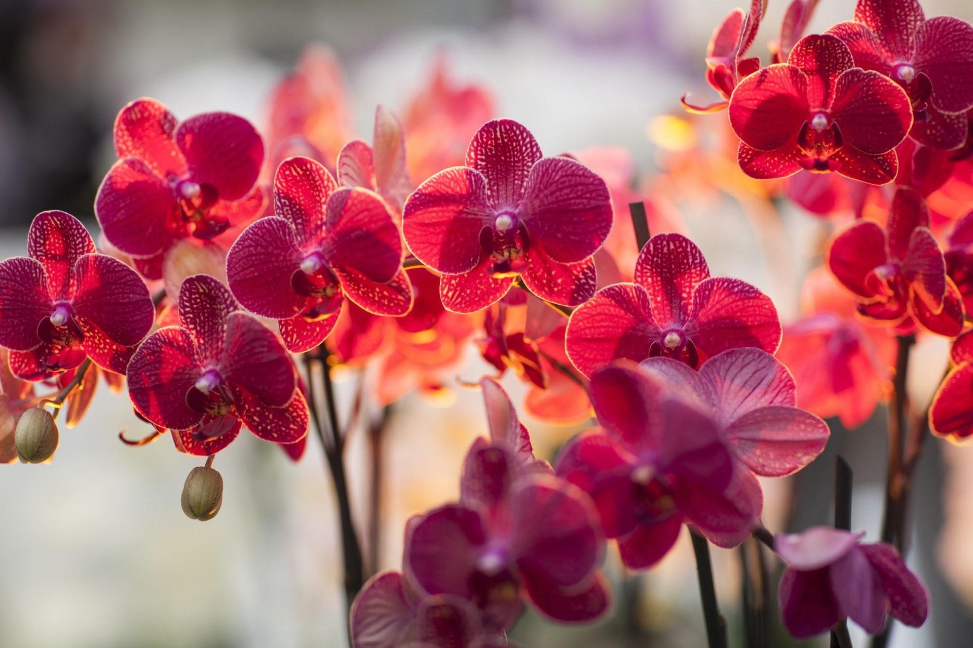 Hình nền desktop hoa lan cực đẹp
