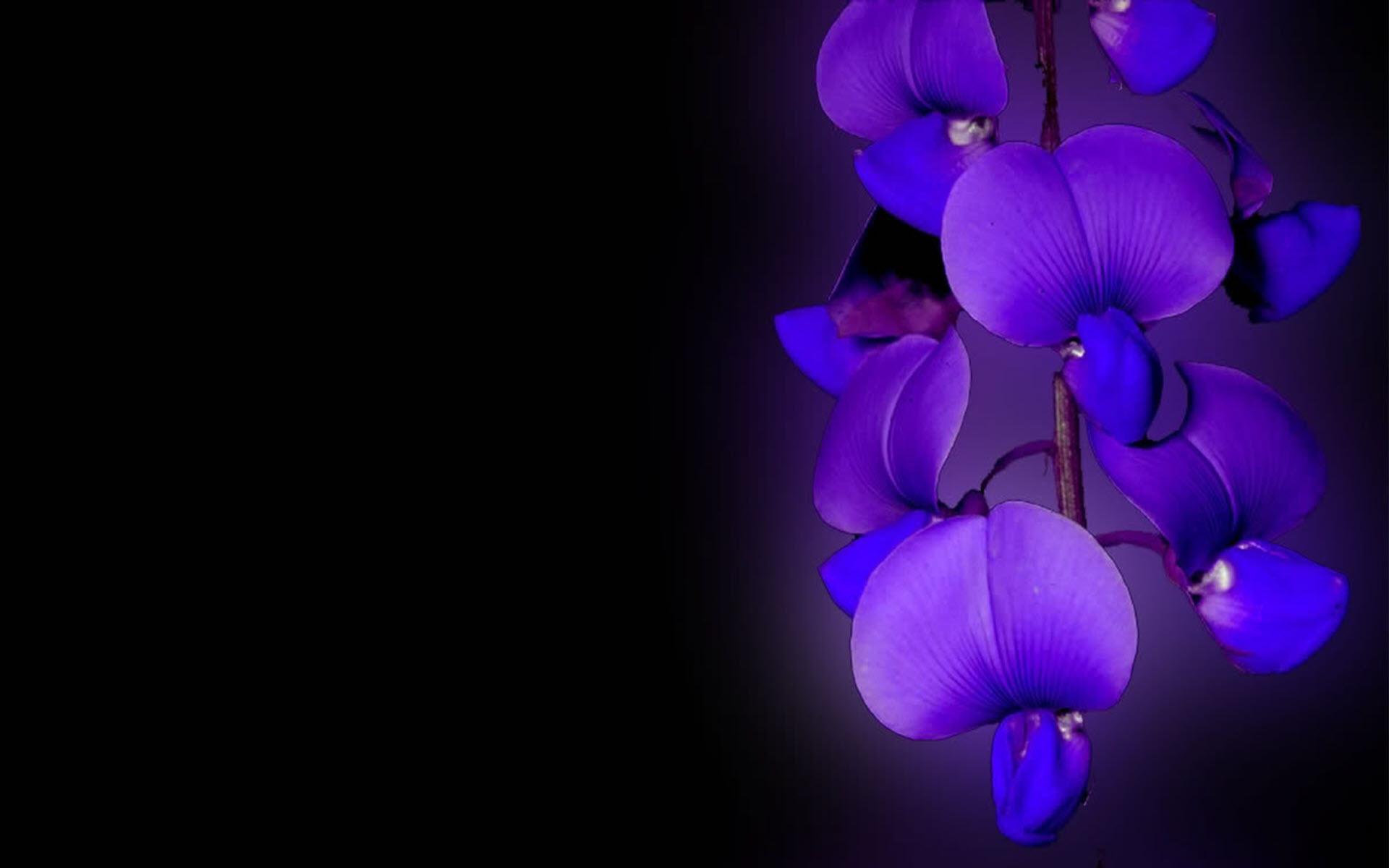 Hình nền hoa lan cực đẹp