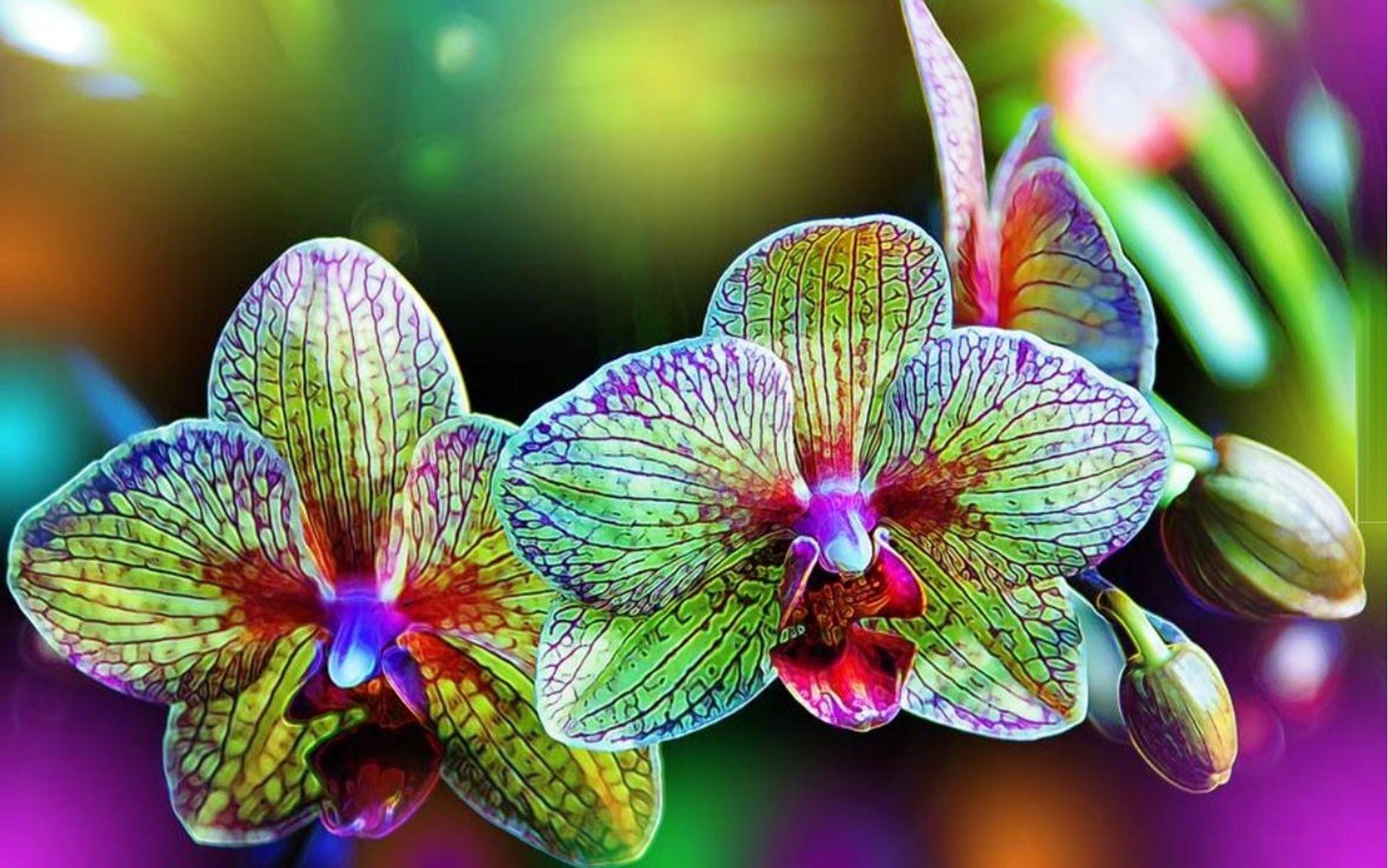 Hình nền hoa lan đa sắc màu