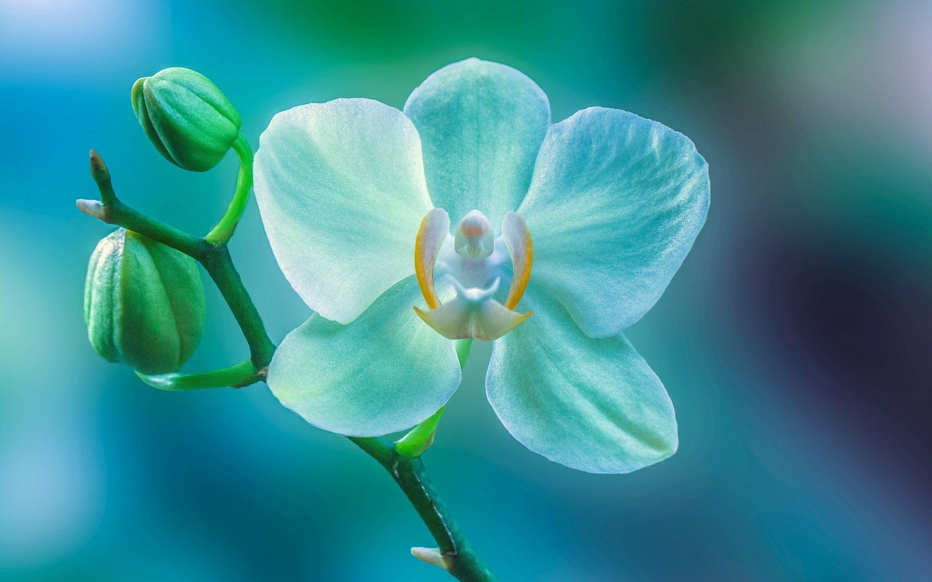 Hình nền hoa lan đẹp chất lượng nhất