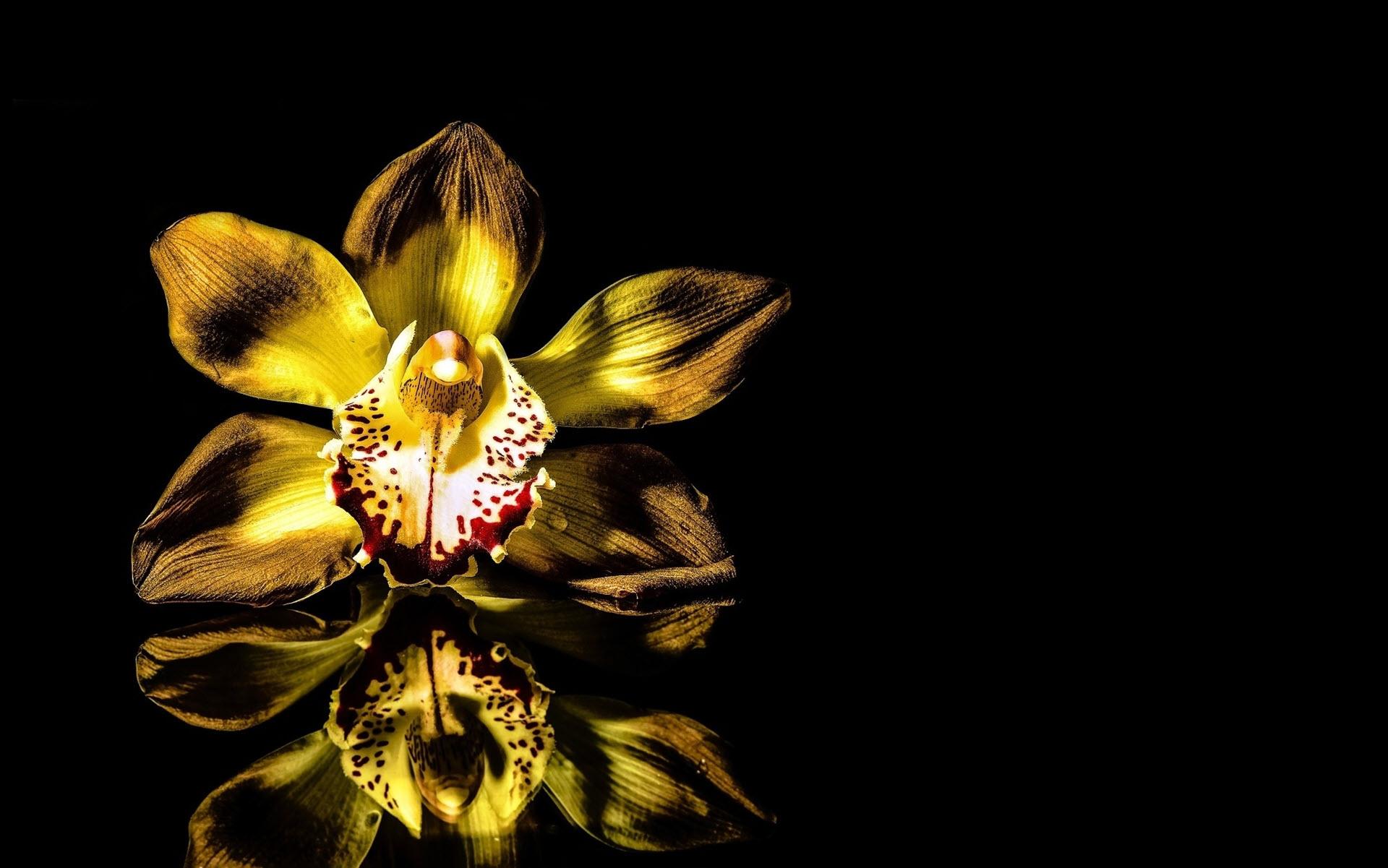 Hình nền hoa lan đẹp, nghệ thuật