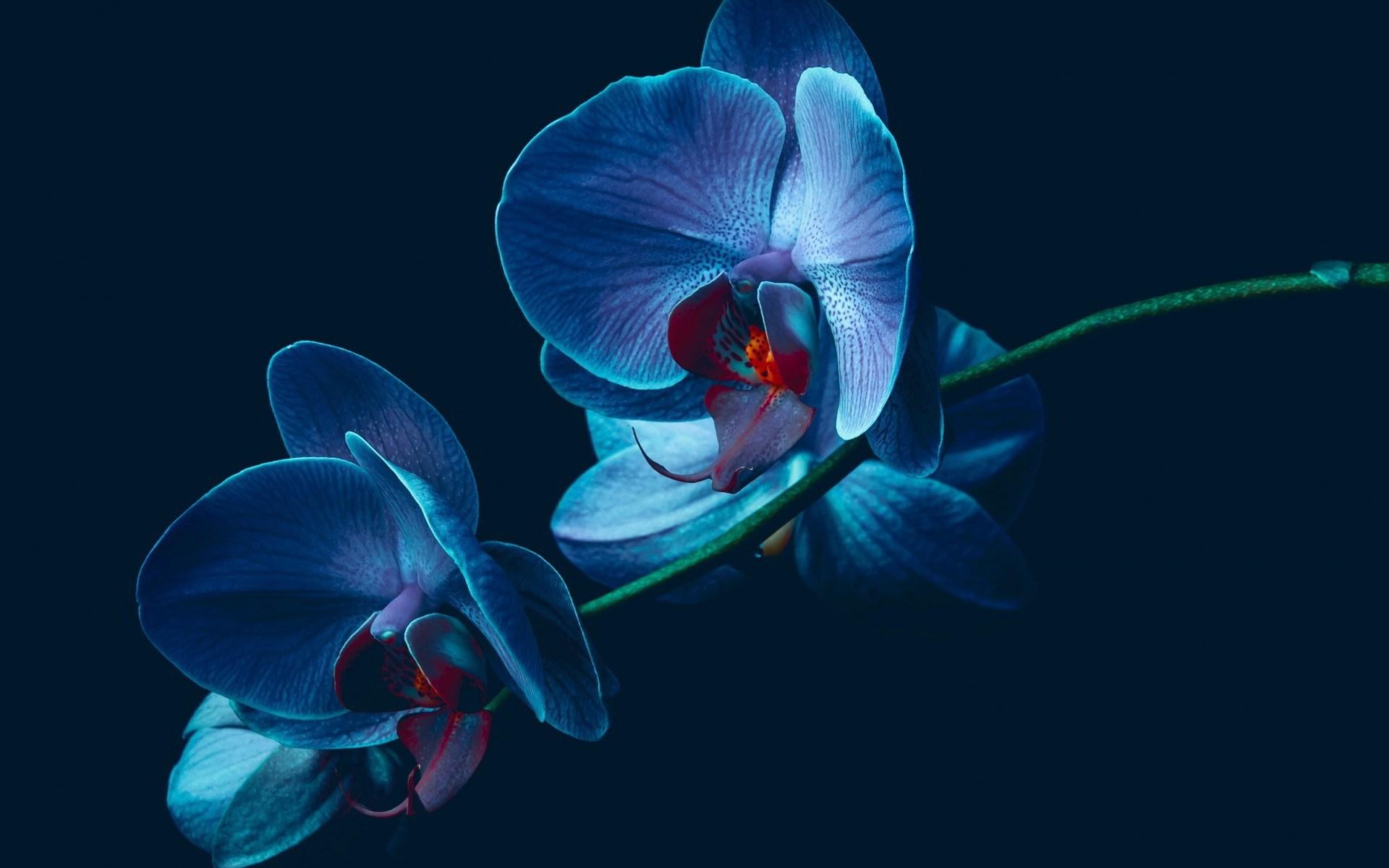 Hình nền hoa lan đẹp nhất