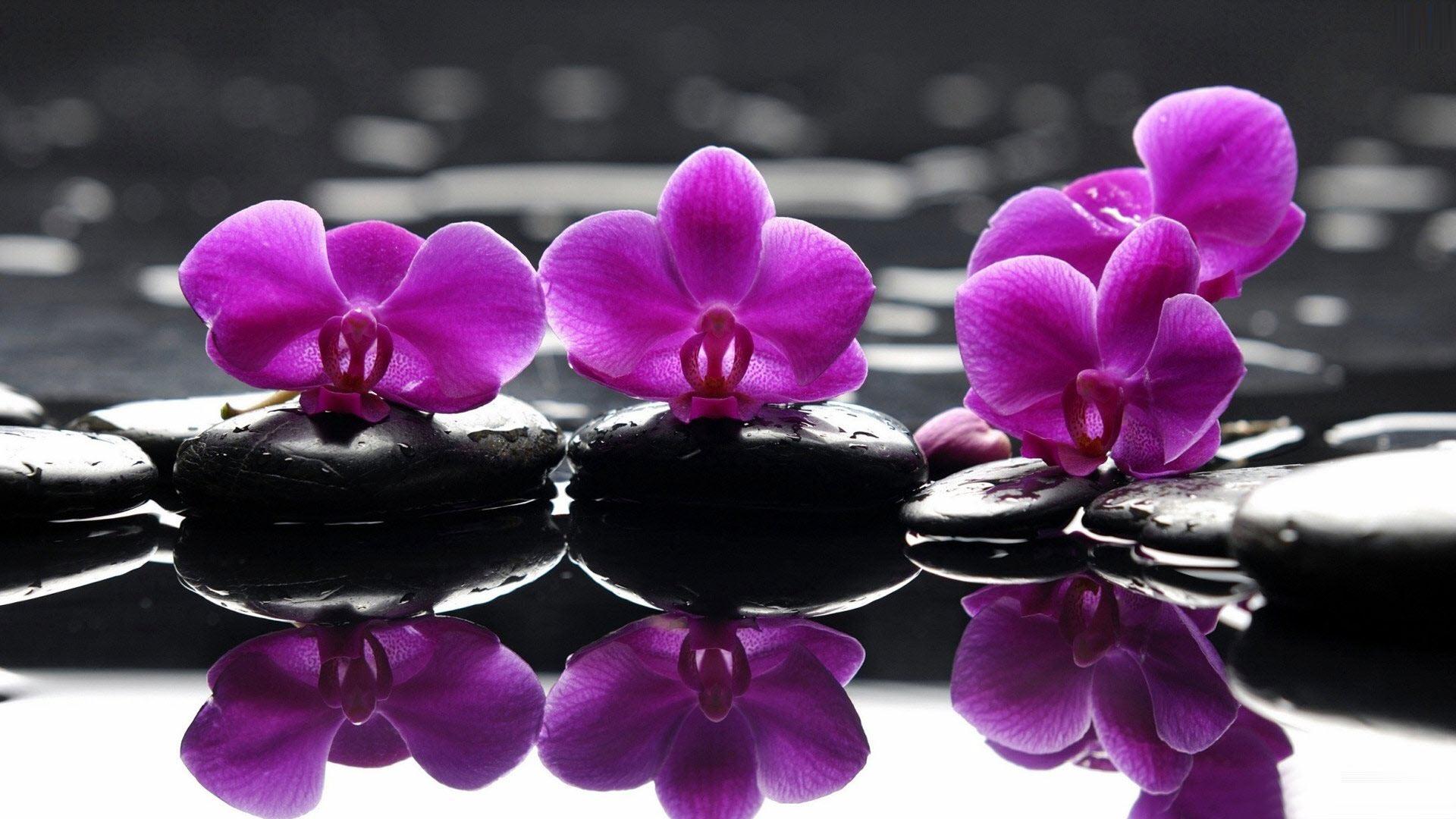 Hình nền hoa phong lan lãng mạn đẹp nhất