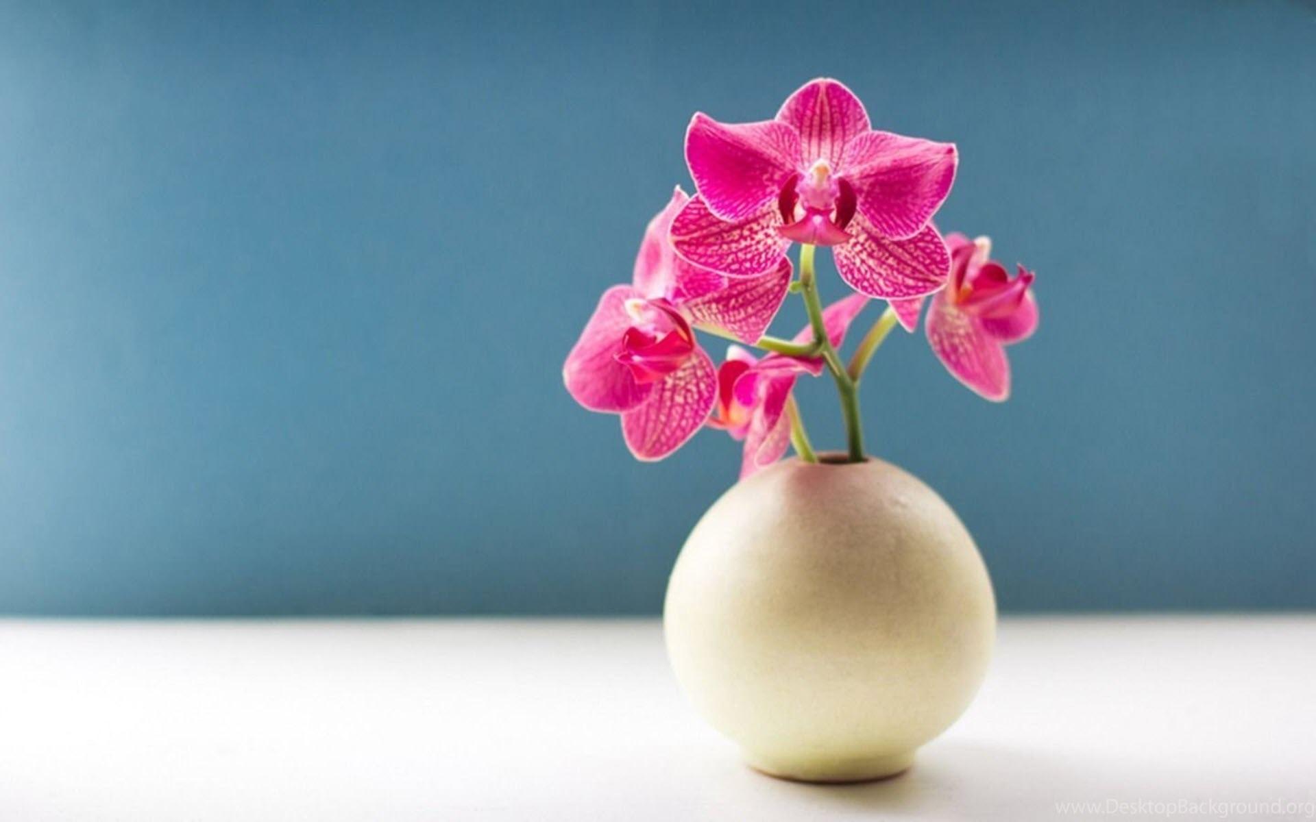 Hình nền lọ hoa lan đẹp