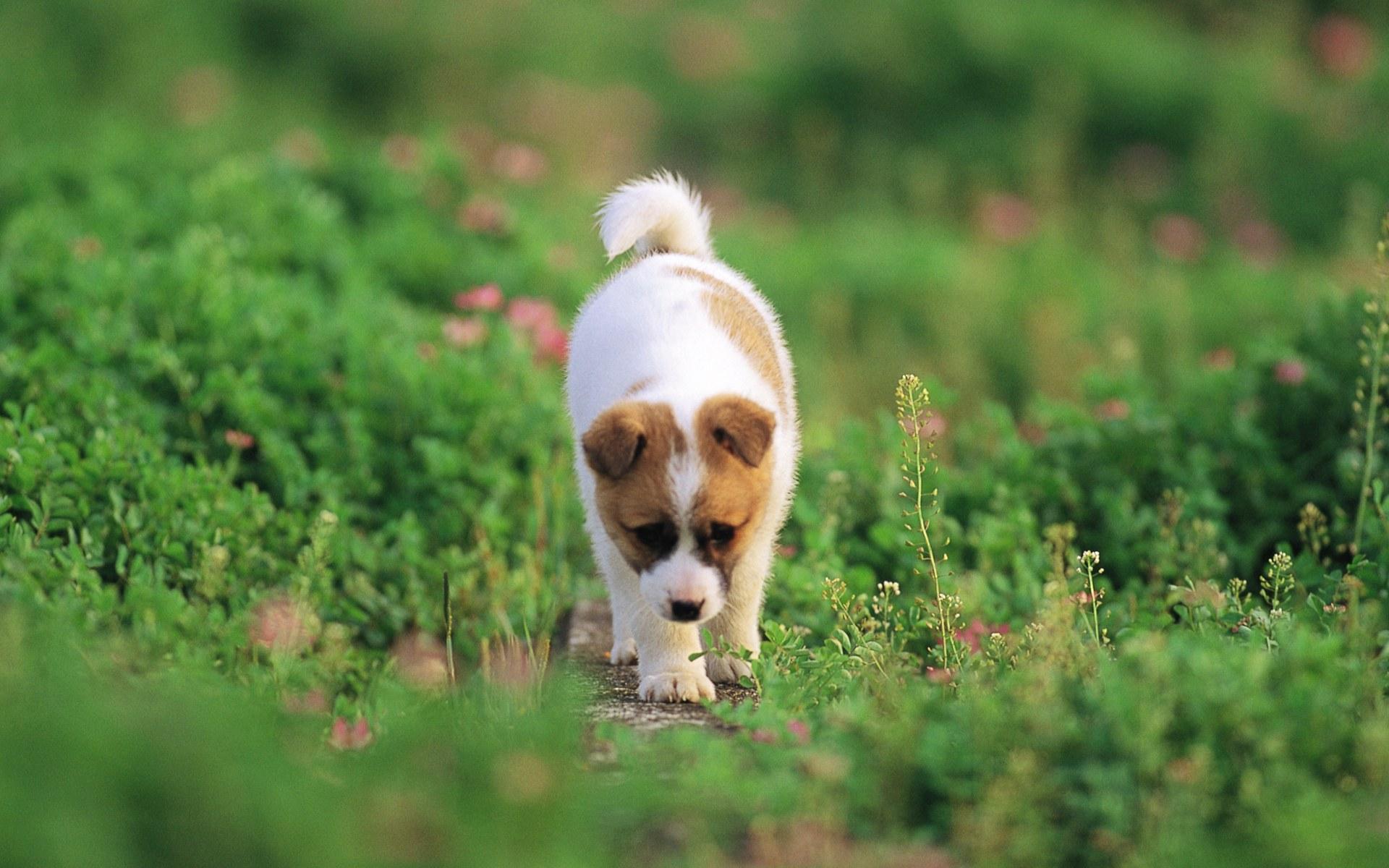 Hình nền về đôi cún con đáng yêu